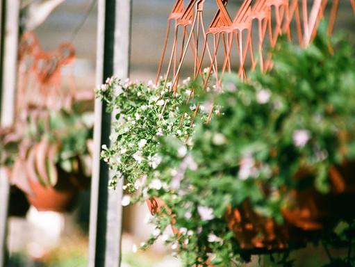 PUP Plants: wielka wyprzedaż roślin w Brukseli