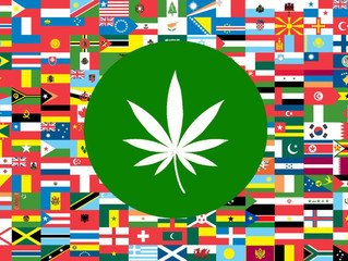 The UN Drug Committee's Cannabis Findings
