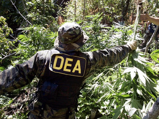 How the DEA's Move Against CBD May Not Even Be LEGAL!