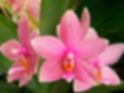 pink_orchid_flower_picture.jpg