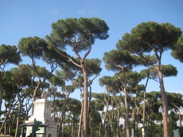 Villa Borghese, 2008