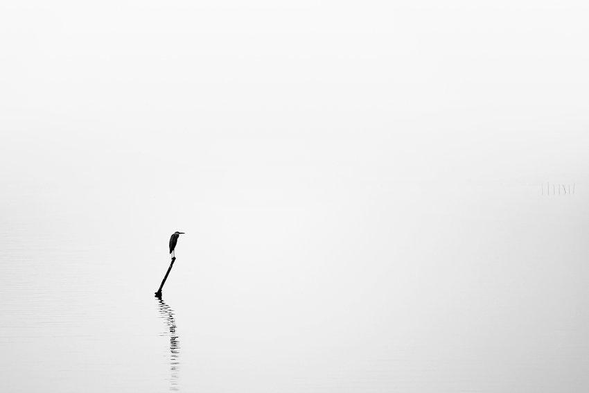 Immagine di un airone su un lago immerso nella nebbia