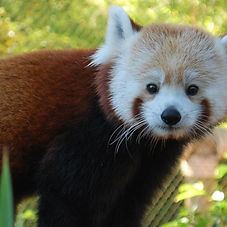 Go on a Senior Safari at Happy Hollow Park and Zoo