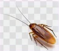 cucaracha_edited_edited_edited.jpg
