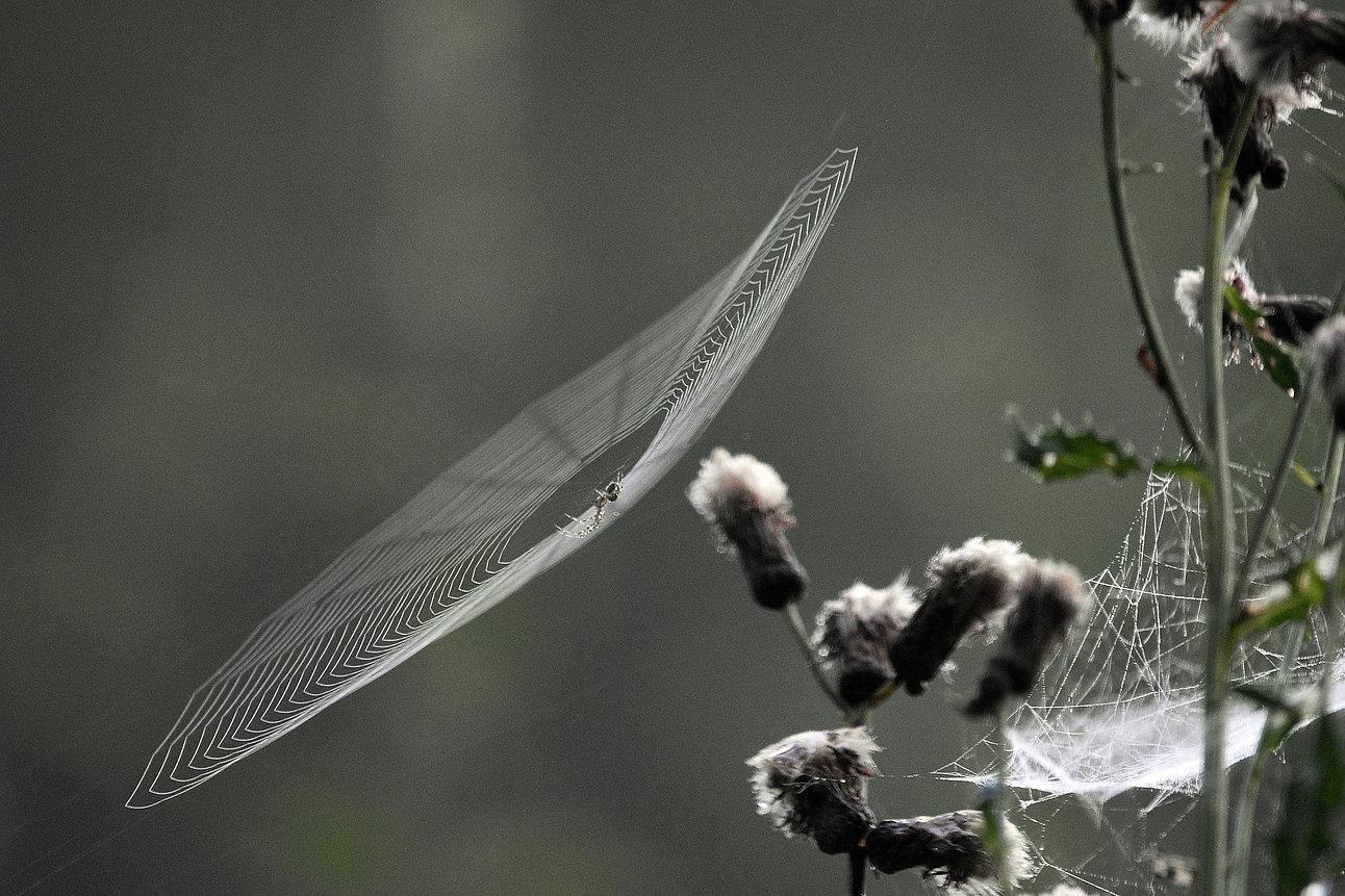 Fumigación de arañas y alacranes en Guadalajara