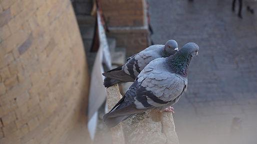 Reubicaión de aves