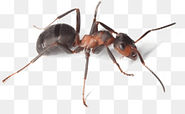 kisspng-nature-gift-store-live-ant-farm-