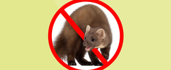 Schutz vor tierischen Schäden