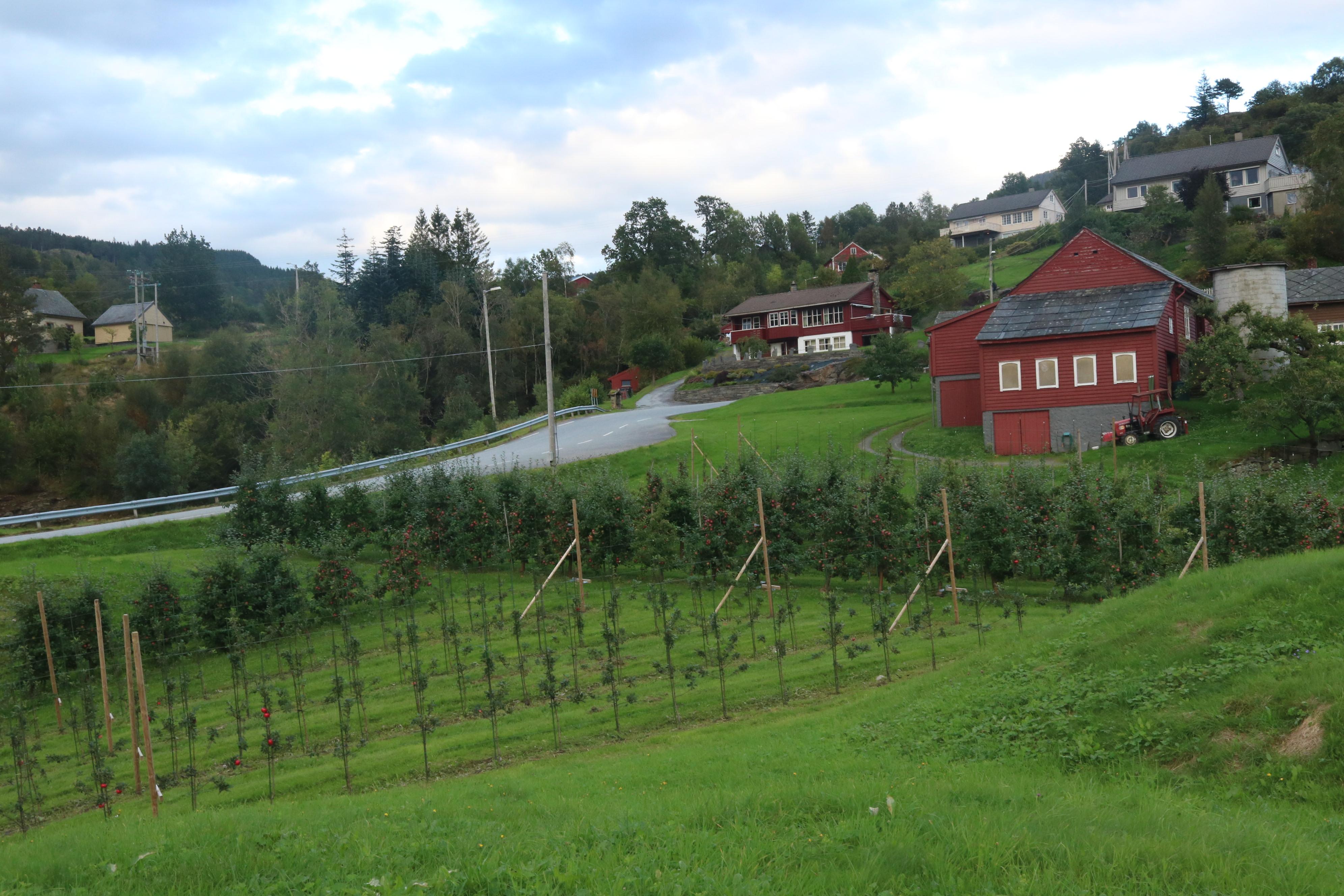 Aple farming