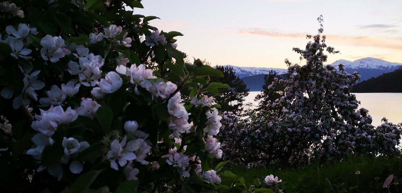 Fruit district of Norway appelblossom.jp