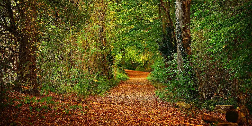 Mindfulness in Nature Longford Park, Stretford (1)