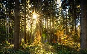 forest-2960091_1920.jpg