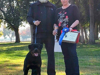 Stellen vom Schloss Hexental is now 3x Best Male Puppy in Show!!!