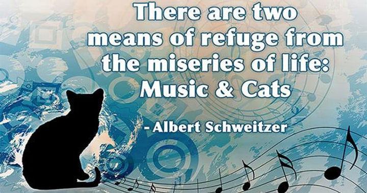 Albert Schwitzer quote miseries music and cats.jpg