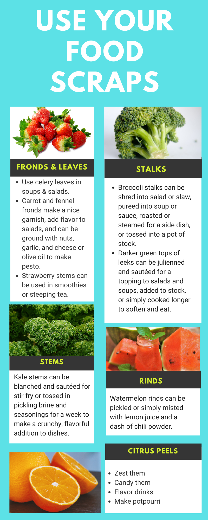 How to Use Food Scraps