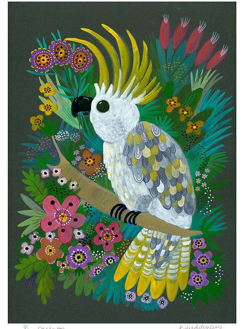 Cockatoo - Limited Edition Colour Print