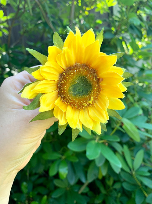 Vlásenka Velká Slunečnice