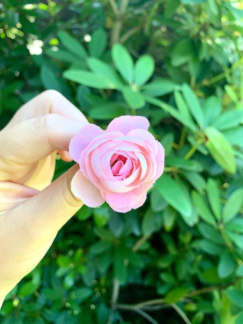 Vlásenka Malá Růžová Růžička