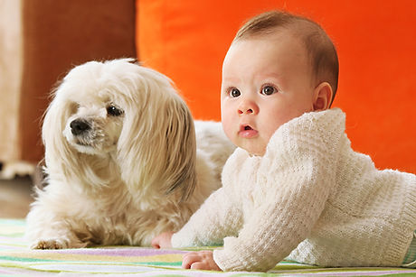 INTRODUCING_DOG_AND_BABY_Featured.jpg