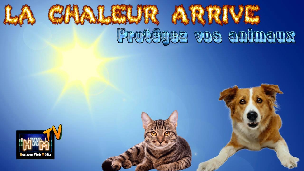 La Chaleur arrive - Protégez vos animaux !