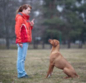 Master and her obedient (rhodesian ridge