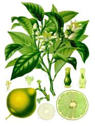 Gelée de Bergamotes