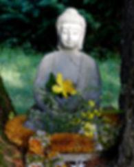 Bouddha au creux du cèdre