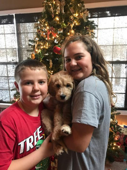 Ginger at Christmas