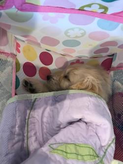 Shhh.. Itsy Bitsy Sleeping