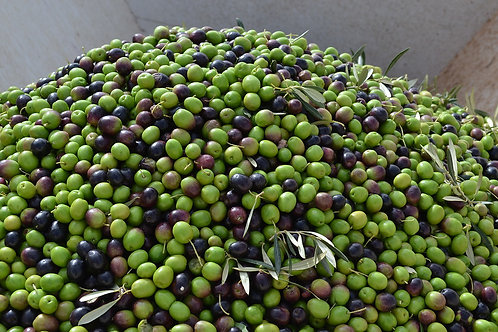 Frantoio Leccino Ultra Premium Extra Virgin Olive Oil