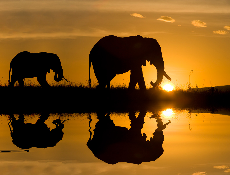 zuckerman_wildlife_photography_image04