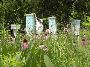 Bee Hives in Flowers with tall super.JPG
