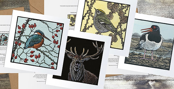 Kingfisher, Oystercatcher, Red Deer, Goldcrest on Larch Square cards