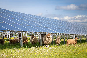 Solar off-grid - Agriculture.jpg