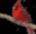 4667248-download-cardinal-cardinal-with-