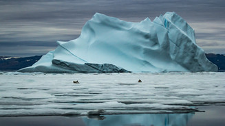 ARCTIC DISCOVERY