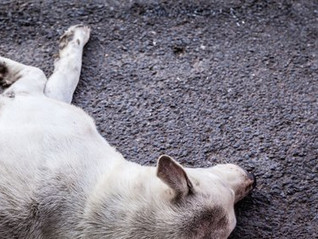 Dead Dog: A Story From the Grave