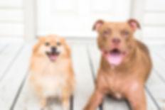Wiler Weddings Dogs