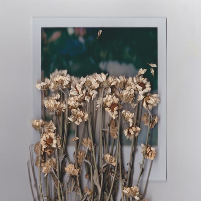 Polaroids & Flowers