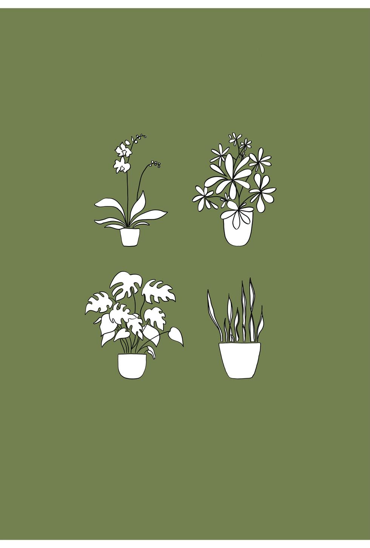 House plants block