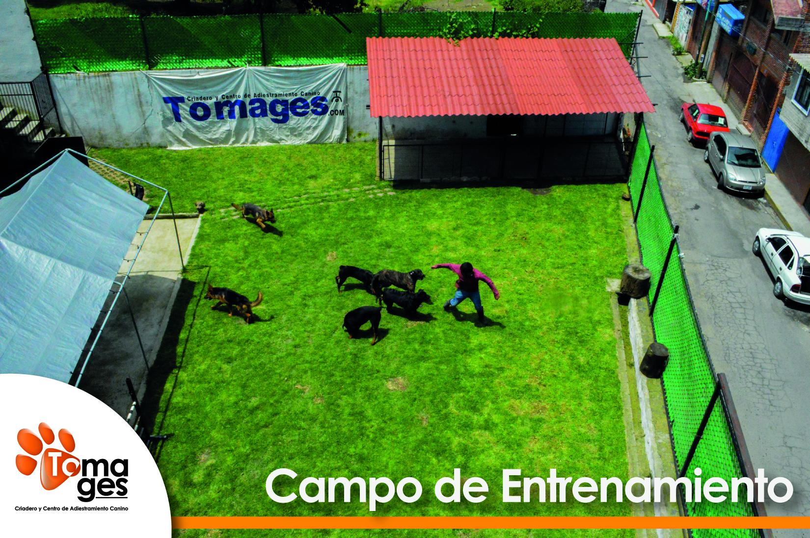 Campo de entrenamiento principal.