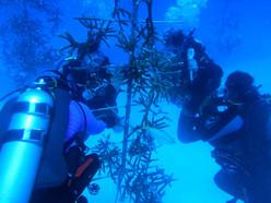 Scubi Jew Spring Break Trip with Coral R