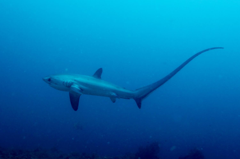 Global Shark Conservation