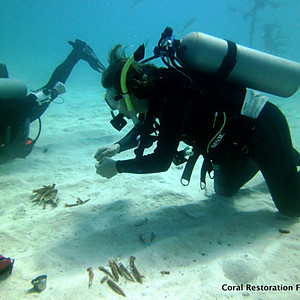 Volunteering with the Coral Restoration Foundation in Key Largo