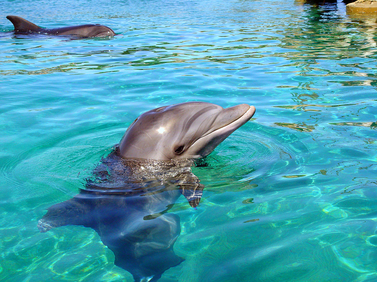 Israel Marine Mammal Research