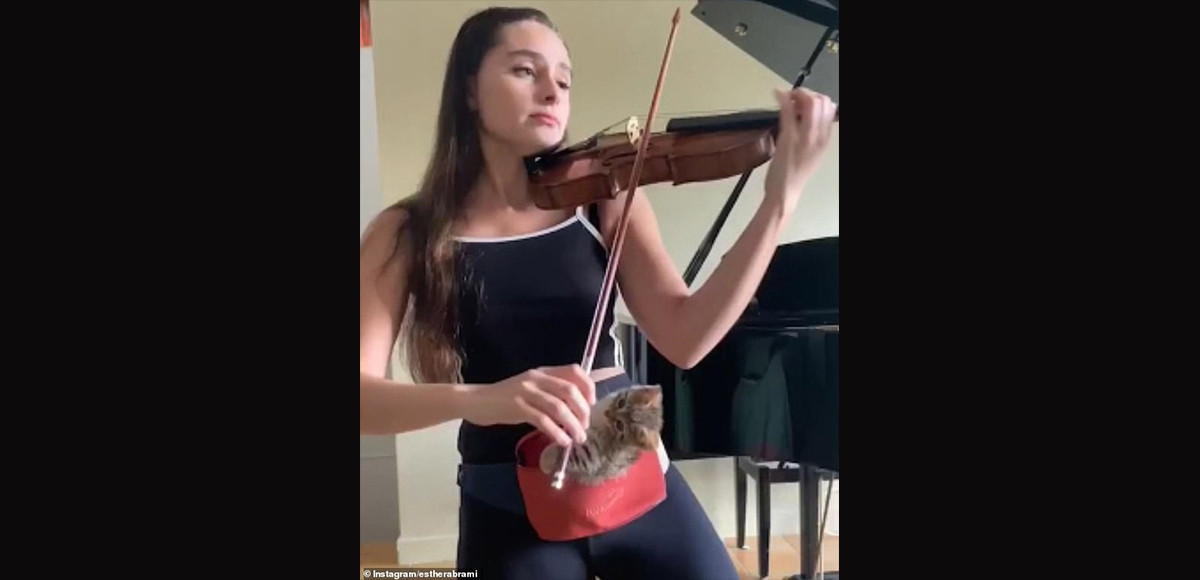 Woman plays violin as cat listens. Wholesome video gets over 3 million views.