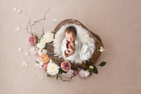 Miss Frankie - Newborn