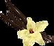vanilla-pods-isolated-vector-7369162_edi