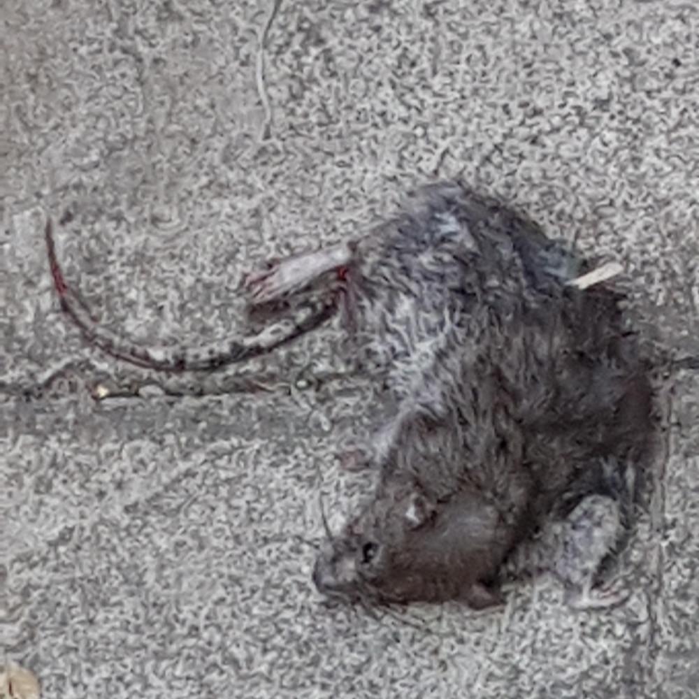 Nick Toczek, Jaxson's sleeping hamster