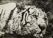 Tiger - Ink